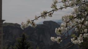 Blomma det vita vårträdet på bakgrund av Meteora berg lager videofilmer