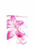 blomma drink Royaltyfria Bilder