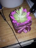 Blomma efter kirurgi Royaltyfri Foto