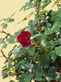 Blomma efter regnet royaltyfria foton