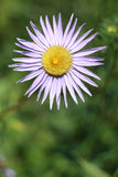 blomma en Arkivfoto