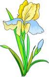 Blomma en iris Arkivfoton