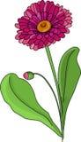 Blomma en tusensköna Fotografering för Bildbyråer