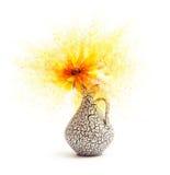 Blomma - explodera arkivbild