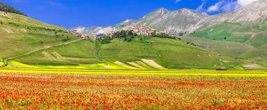 Blomma fält av Castelluccio di Norcia Arkivfoton