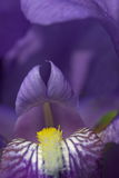 blomma för 2 abstraktion Arkivfoton