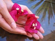 blomma för 2 bad Royaltyfria Bilder