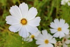 Blomma för blomma Fotografering för Bildbyråer