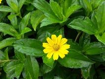 Blomma för blomma arkivfoto