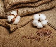 Blomma för bomullsväxt royaltyfria foton