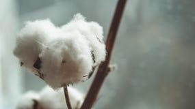 Blomma för bomullsväxt Filial för blomma för bomullsväxt på grå bakgrund stucken livlig scarftextil för bakgrund closeup royaltyfri foto