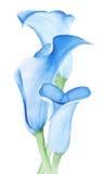 Blomma för Callalilja för fokusförgrund för 3 bukett bröllop stock illustrationer