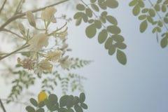 Blomma för dubbel exponering Fotografering för Bildbyråer