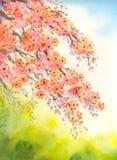 blomma för filialer Akvarellbakgrund