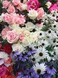 Blomma för flickan på valentindag Arkivfoton
