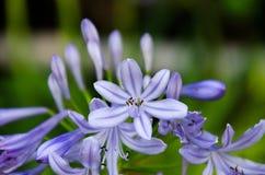 Blomma för formell trädgård Arkivbild