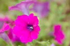 Blomma för formell trädgård Royaltyfria Foton