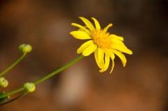 Blomma för formell trädgård Royaltyfri Fotografi