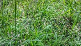 Blomma för grönt gräs på jordbakgrund Royaltyfria Bilder