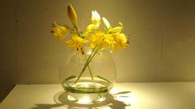 Blomma för gul guld Arkivbild