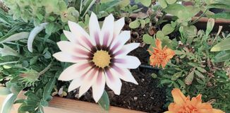 Blomma f?r h?rligt och soligt arkivfoto