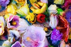 blomma för hibiskus för abstrakt blommabakgrund tropisk i vatten Royaltyfria Foton