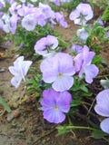 Blomma för Kina Jinzhou internationell trädgårds-Expositionï ¼ Arkivbild