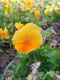 Blomma för Kina Jinzhou internationell trädgårds-Expositionï ¼ Arkivfoto
