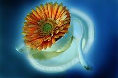 blomma för kopp för kaffe 5 Arkivbilder
