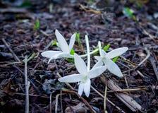 Blomma för korkträd på jordning royaltyfria foton