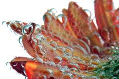 blomma för luftbubblor Royaltyfri Fotografi