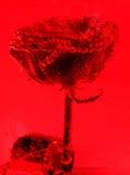 blomma för luftbubblor Arkivfoto