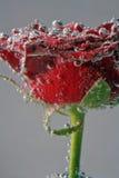 blomma för luftbubblor Arkivbilder