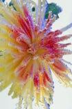 blomma för luftbubblor Arkivfoton