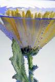 blomma för luftbubblor Royaltyfria Bilder