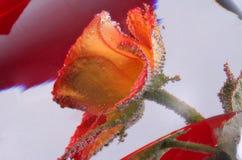 blomma för luftbubblor Royaltyfria Foton