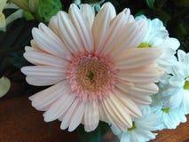Blomma för mig Royaltyfria Bilder