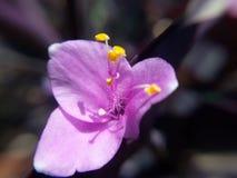 Blomma för natur Royaltyfri Foto