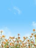 blomma för påskliljar Royaltyfri Foto