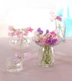 Blomma för söta ärtor Royaltyfria Bilder