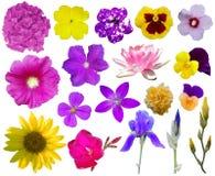 blomma för 2 samling Royaltyfria Bilder
