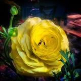 blomma för skönhet Royaltyfri Fotografi