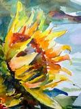 Blomma för solros för vibrerande guling för gräsplan för vind för abstrakt begrepp för vattenfärgkonstbakgrund röd vit Royaltyfria Bilder