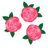 Blomma för tre rosa färger Arkivbild