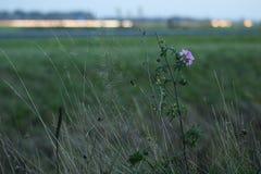 Blomma för vägen arkivfoto