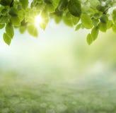 Blomma för vår- eller sommarvärmeabstrakt begrepp .chamomile arkivbild