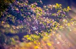 Blomma för vårrosa färger arkivbild