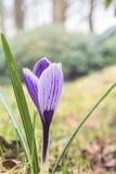 Blomma för vårsäsong Fotografering för Bildbyråer