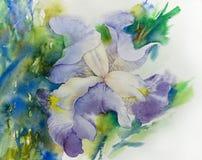 Blomma för vattenfärgillustrationiris Arkivfoto