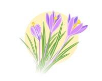 blomma för Violett-blått krokusvår Royaltyfria Foton